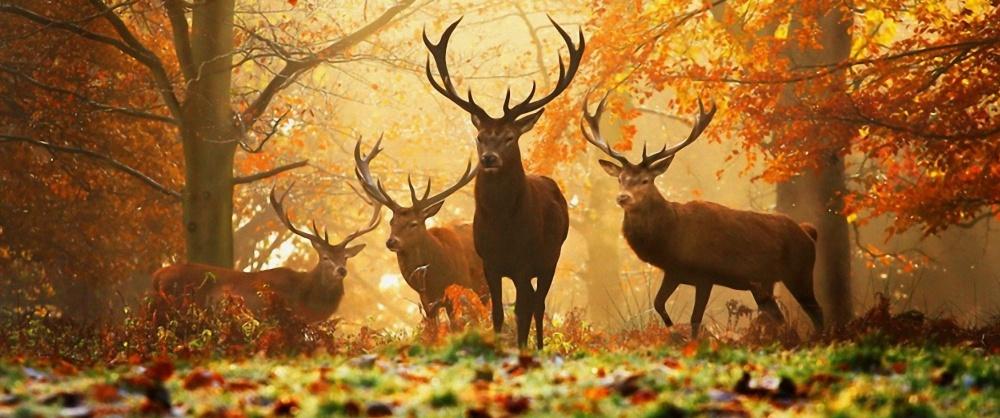 Erdőket, Vadakat, Életet mentünk…